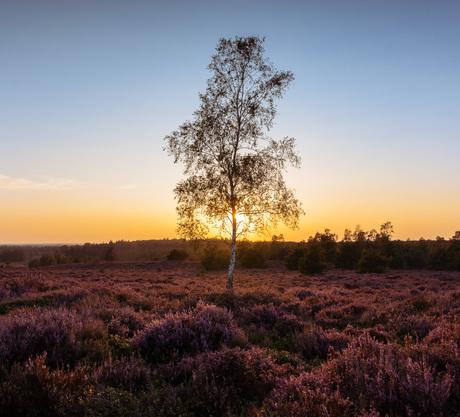 Heide seizoen