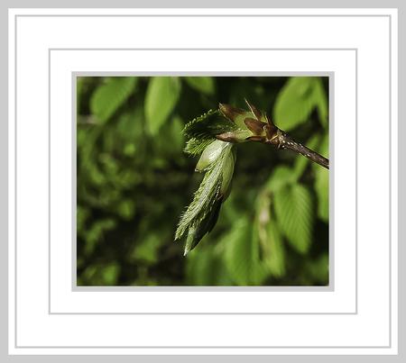 Voorjaar 2021 - Macro uit de natuur. - foto door jos1953 op 08-04-2021 - locatie: Hasselt, België - deze foto bevat: rechthoek, organisme, terrestrische plant, aanpassing, takje, natuurlijk landschap, modeaccessoire, bloeiende plant, natuurlijk materiaal, gras