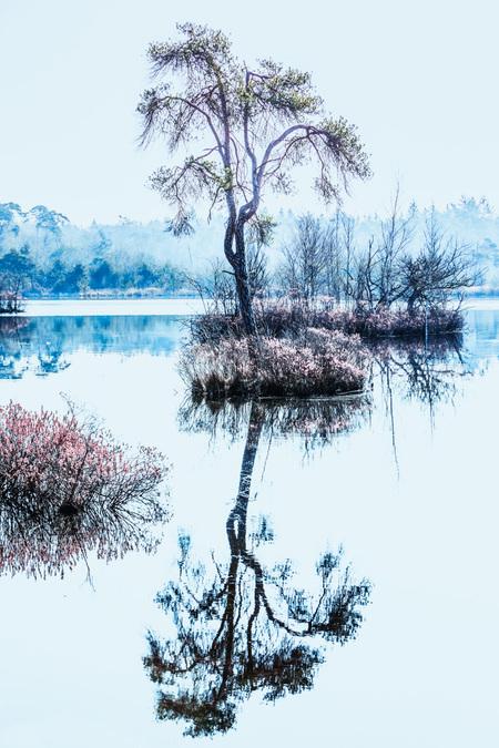 Stil - Oisterwijkse vennen - foto door gerard-32 op 14-04-2021 - deze foto bevat: water, lucht, watervoorraden, ecoregio, natuurlijk landschap, boom, afdeling, takje, meer, fabriek