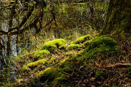 De zon komt langs - Meijendel - foto door Eugenio op 12-04-2021 - deze foto bevat: natuur, landschap, bomen, mos, fabriek, natuurlijk landschap, terrestrische plant, hout, takje, kofferbak, bodembedekker, gras, struik, woud