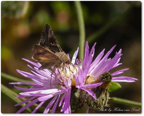 Motje of vlindertje?