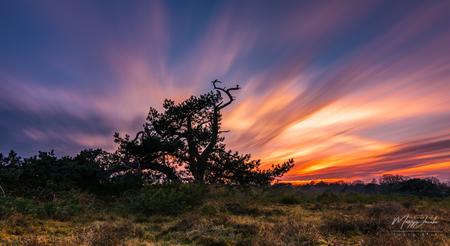 Sky on Fire! - De lucht stond gisteravond in lichterlaaie op de Bussumerheide! - foto door martijnjacobs1988 op 10-04-2021 - locatie: Bussumerheide, 1411 GT Huizen, Nederland - deze foto bevat: landschap, zonsondergang, heide, langesluitertijd, wolk, lucht, fabriek, atmosfeer, natuurlijk landschap, afdeling, nagloeien, boom, schemer, zonlicht