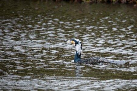 Aalschover - geen - foto door bertus52 op 16-04-2021 - deze foto bevat: water, vogel, watervoorraden, vloeistof, bek, meer, waterloop, gras, veer, watervogels