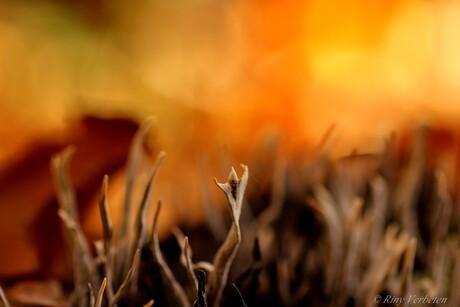 Bos in vuur en vlam