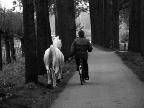 Paard uitlaten,