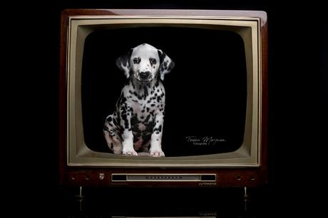 Watching TV - Hit the spot litter
