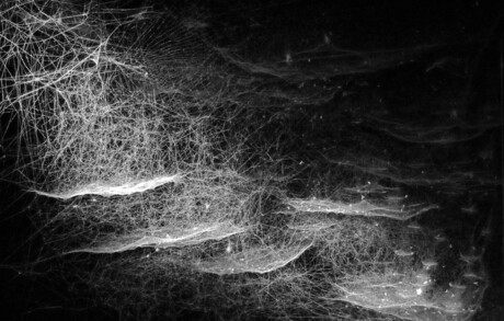 Spiderwebs...