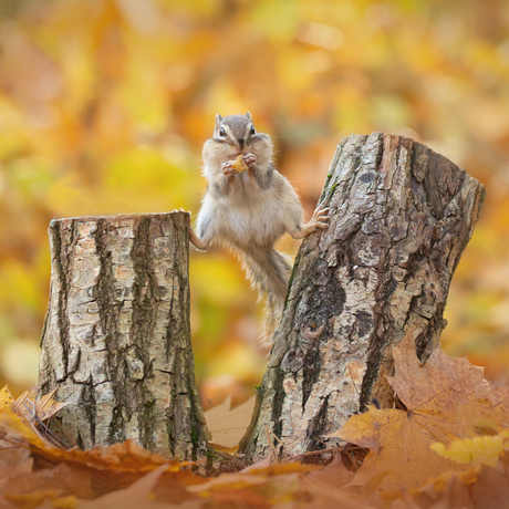 I'm nuts about squirrels