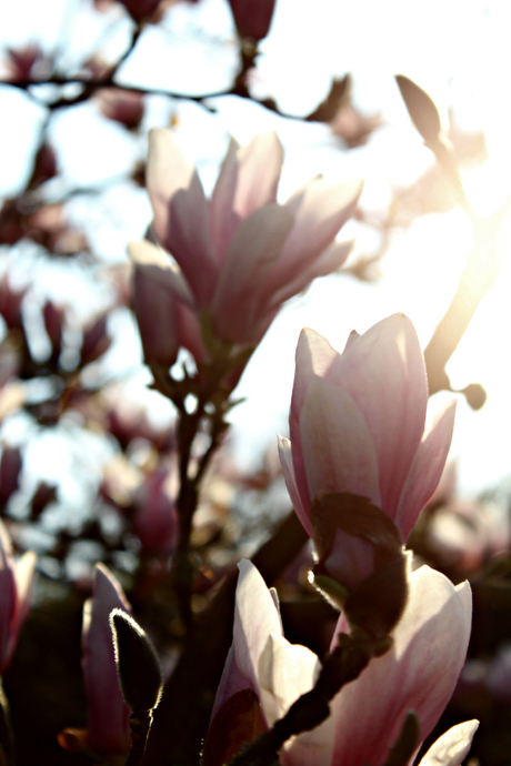 Finally Spring arrives