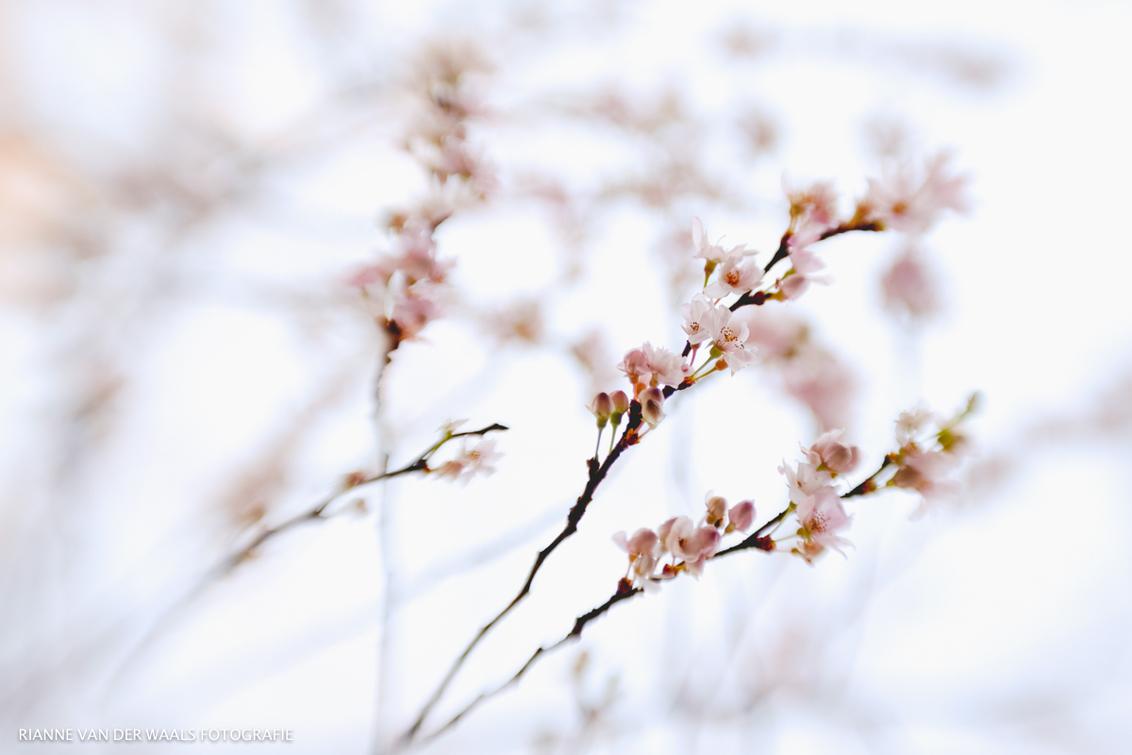 Bijna winter! - De natuur is een beetje in de war!  Lensbaby Sweet50 - foto door RiannevanderWaals op 14-12-2015 - deze foto bevat: bloem, lente, natuur, herfst, voorjaar, lensbaby, sweet50