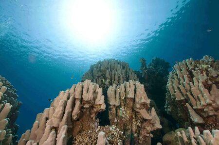 onder-waterlandschap - koraalrif in de Rode Zee - foto door ge-020 op 27-03-2011 - deze foto bevat: duiken, rode zee, steenkoraal