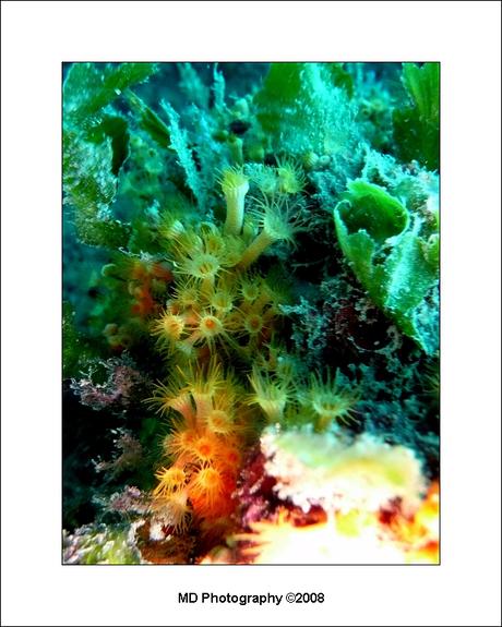 onderwaterwereld 4