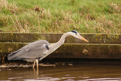 Reiger in jachthouding