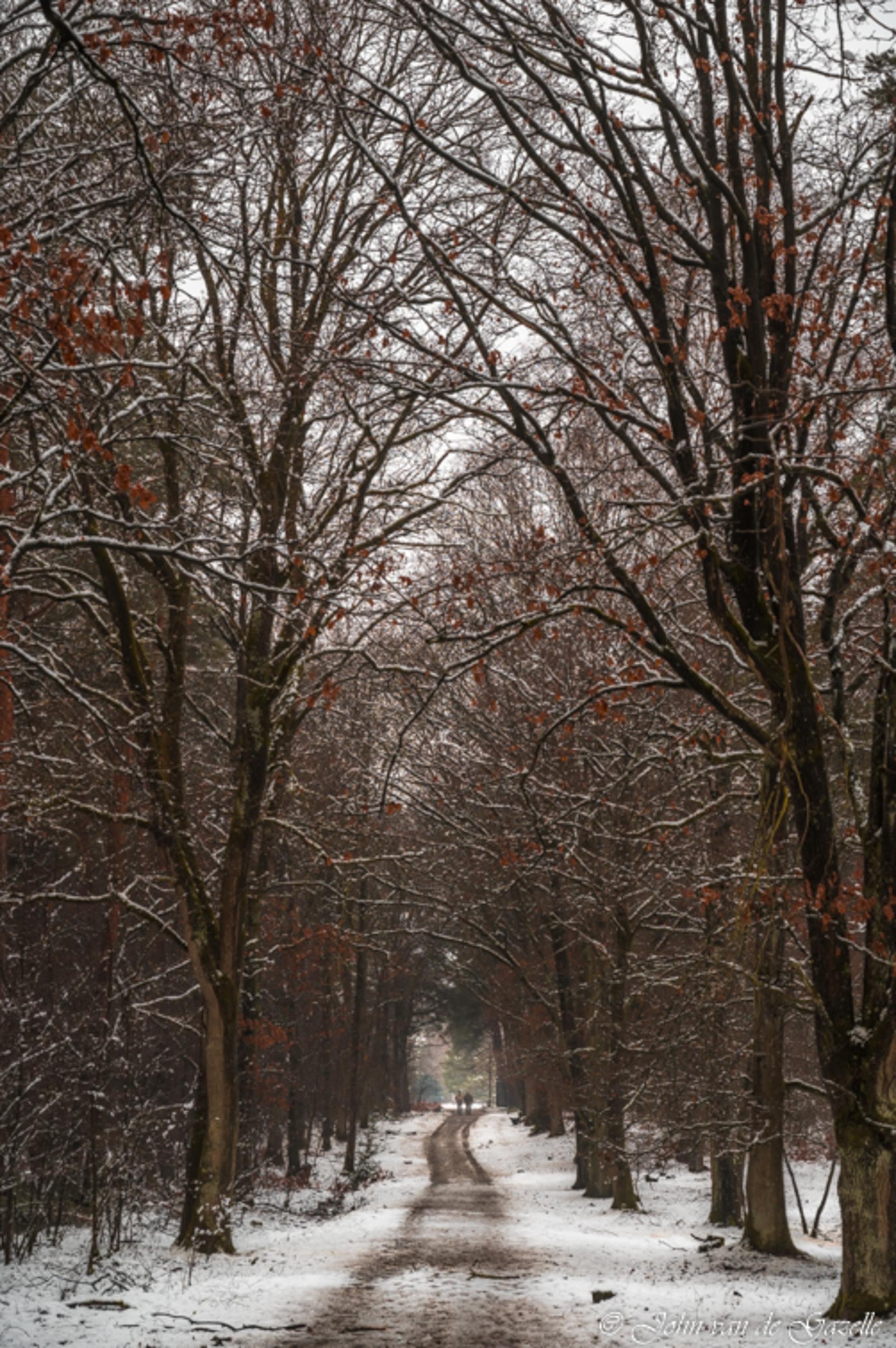 Winter in de Tevenerheide - Bospad met wandelaars in de sneeuw.  Bedankt, voor jullie fijne reacties. Groet, John. - foto door JvandeGazelle op 02-02-2021 - deze foto bevat: lucht, mensen, licht, sneeuw, winter, bospad, landschap, heide, bos, bomen, sneeuwval, wandelaars, sfeervol, john van de gazelle, tevernerheide - Deze foto mag gebruikt worden in een Zoom.nl publicatie