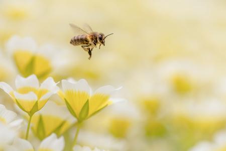 Bezzzig - - - foto door rolf026 op 28-05-2015 - deze foto bevat: macro, wesp, natuur, bij, geel, tuin, vleugels, bloemen, vliegen, zomer, bokeh