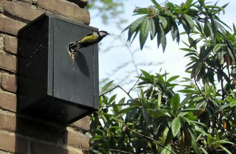 Vogelhuisje met Koolmees
