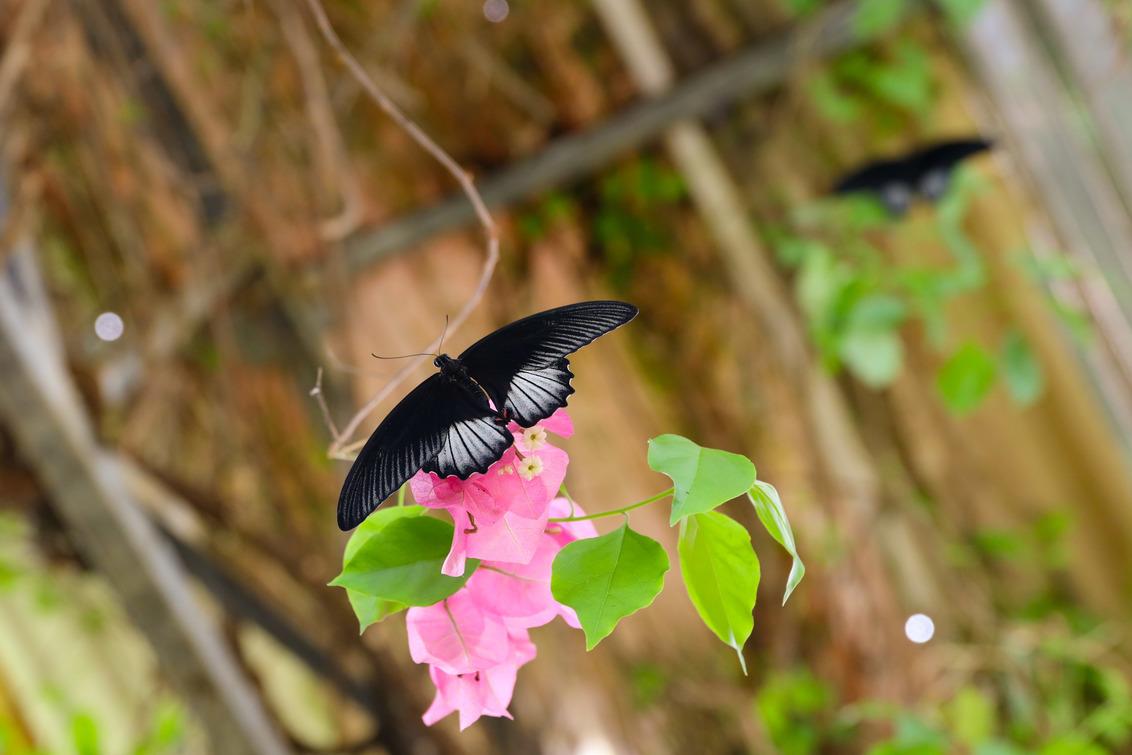 Vlinder - Mooie vlinder - foto door schaiky op 04-12-2020 - deze foto bevat: macro, zon, vlinder, orchidee, zomer, insect, vlindertuin