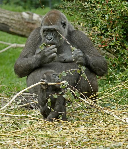 Lunchpauze - Even tijd voor een hapje. groetjes, Nel - foto door Nel Hoetmer op 26-02-2014 - deze foto bevat: dieren, apen, nel
