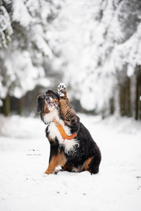 Who loves snow?