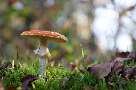 Geen kabouters maar wel paddenstoelen