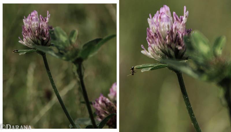 The suicide ant - Deze mier zag het harde werken dag in dag uit niet meer zitten.  Rest in peace my friend.  Neem ook een kijkje op www.facebook.com/Daranafoto - foto door darana op 05-07-2012 - deze foto bevat: bloem, mier, moord, verdriet, sprong, zelfmoord