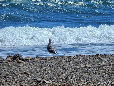 Kijken naar de zee.....