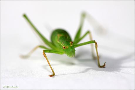 Mr. Green.