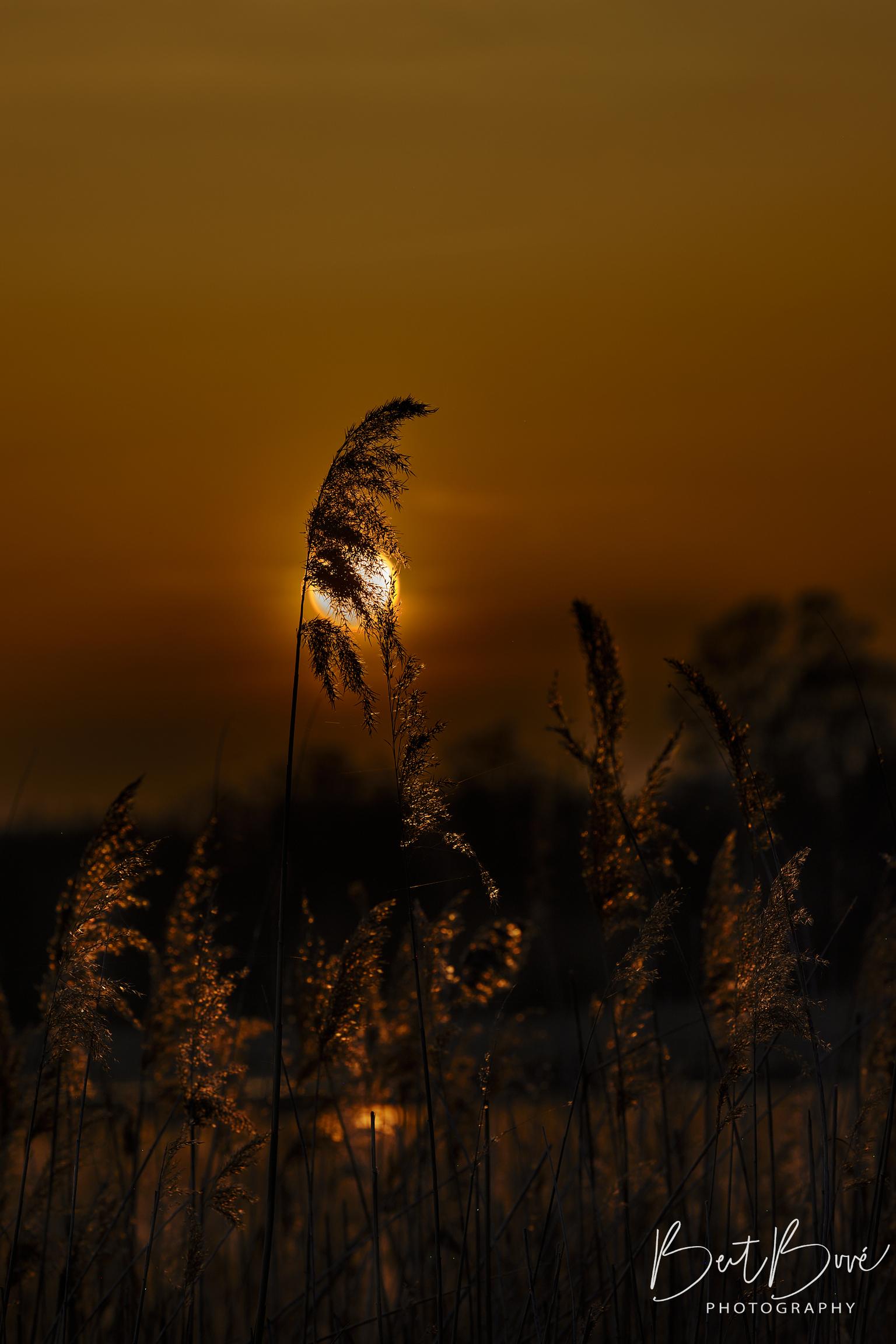 Sunset - Zonsondergang met mooie reflectie - foto door kitchenboy op 09-04-2021 - locatie: 3440 Zoutleeuw, België - deze foto bevat: lucht, fabriek, atmosfeer, wolk, ecoregio, natuurlijk landschap, afdeling, nagloeien, takje, schemer