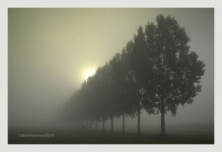 Vroeg in de ochtend - Alles nog dicht van de mist , maar gezien de weersvoorspelling , zou de zon snel doorbreken , het eerste resultaat - foto door a.veerman1 op 25-09-2010 - deze foto bevat: natuur, landschap, mist, bomen, beve, bert veerman