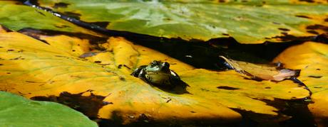 Tussen de waterlelies 3