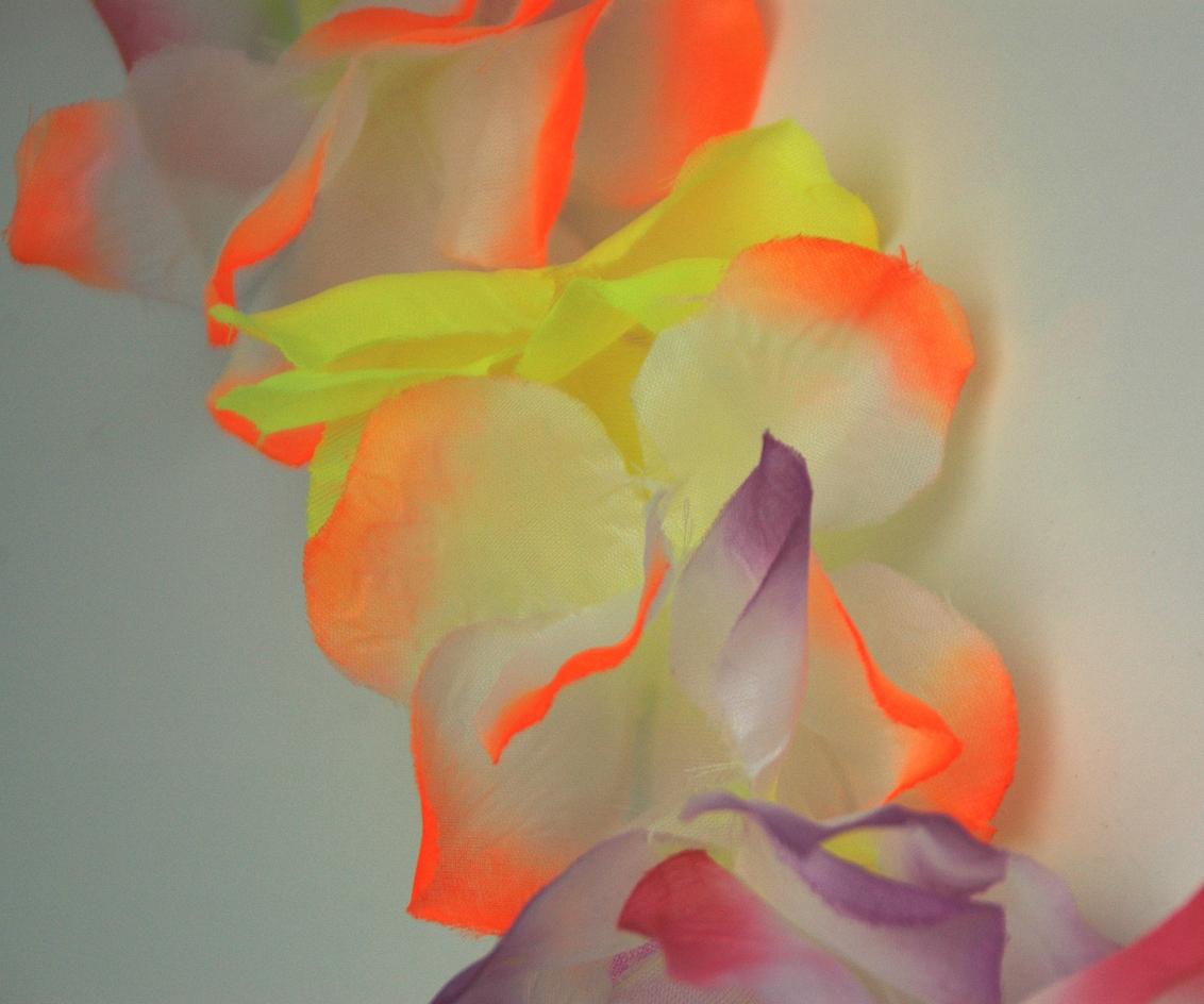 Feest is voorbij - Hawaii krans. - foto door Lailaat op 16-09-2007 - deze foto bevat: bloem, hawaii, biemie, nerds
