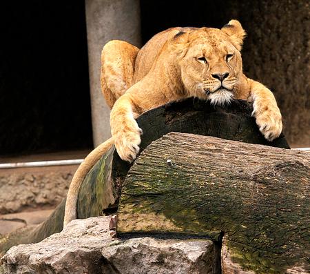 Vermoeiend hoor... - alleen al als ik hoor wat die Nel  allemaal doet ben ik al uitgeput. Groetjes:) - foto door Nel Hoetmer op 28-02-2014 - deze foto bevat: dieren, nel