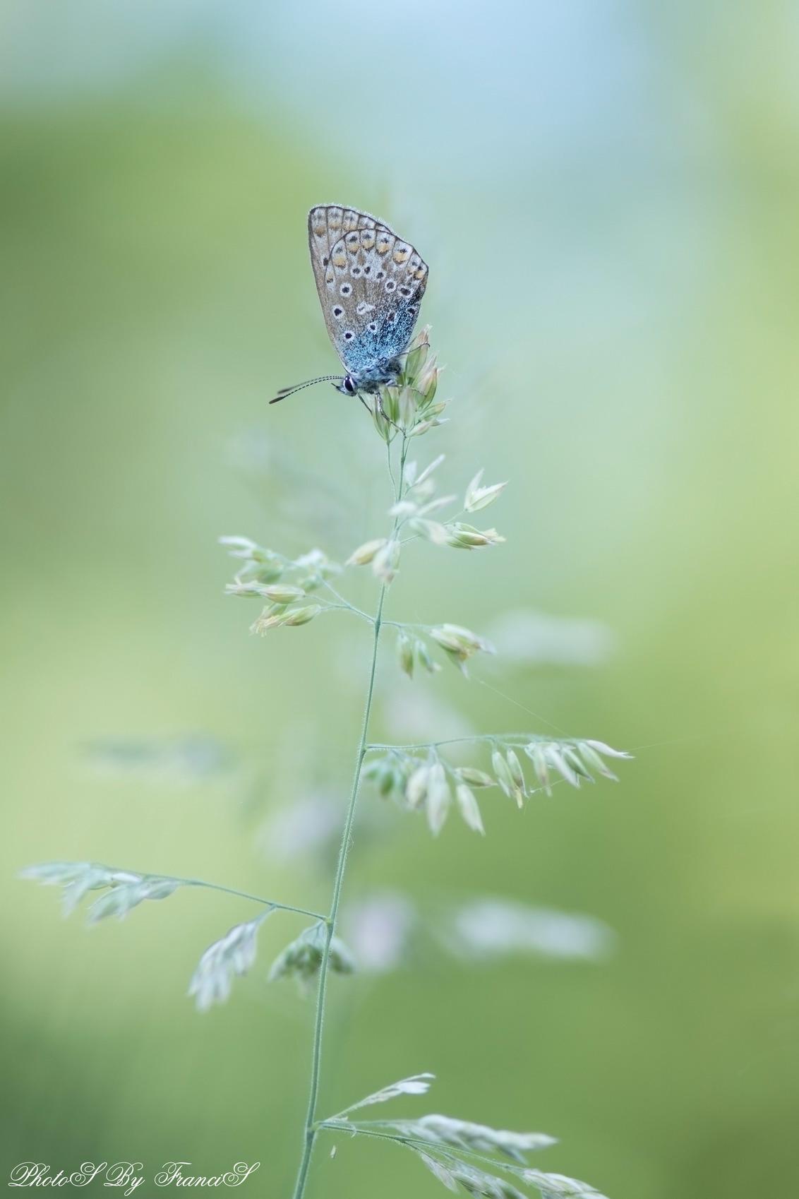 Mooi slaapplekje - Even uitgeschakeld door schouder en nekklachten, maar ik ben weer in beweging zal ik maar zeggen. Daarom even wat foto's van vorig jaar dan maar. Ik  - foto door Francis-Dost op 28-05-2018 - deze foto bevat: macro, lente, natuur, vlinder, licht, insect, dof