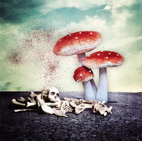 FungusFear . . .