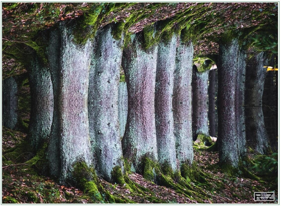 dubbel bos - Goed kijken ....  ;=D - foto door RobZuydervelt op 25-02-2021 - deze foto bevat: structuur, landschap, silhouet, bewerking, paint shop pro