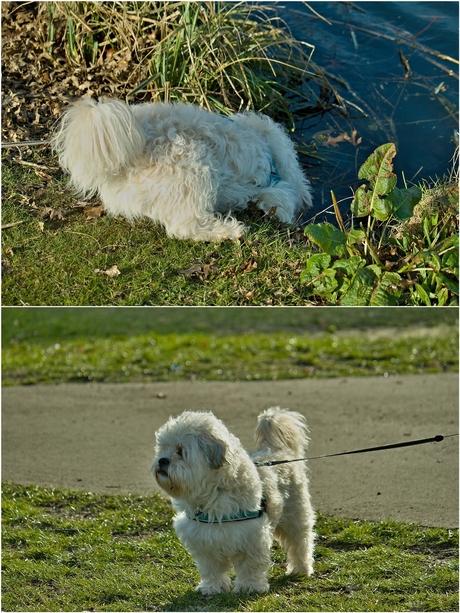 Drinkend hondje in park Esterveld