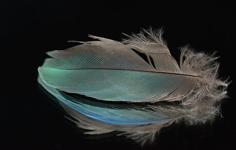 Nice Feather.