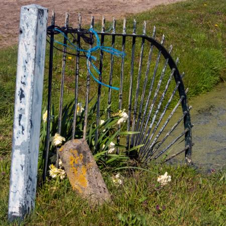 Hekweg - Hek - foto door fotorik op 13-04-2021 - locatie: Noordwijk, Nederland - deze foto bevat: fabriek, hek, land veel, gras, grasland, bodembedekker, landschap, struik, weide, grass familie