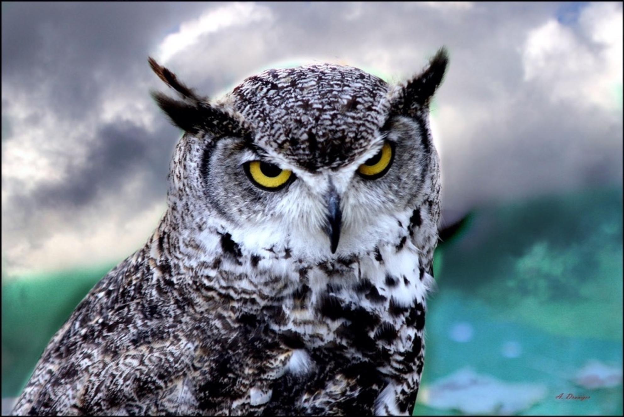 Uil - - - foto door AD1712 op 26-02-2021 - deze foto bevat: roofvogel - Deze foto mag gebruikt worden in een Zoom.nl publicatie