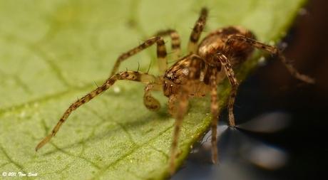 Klein spinnetje op een blad