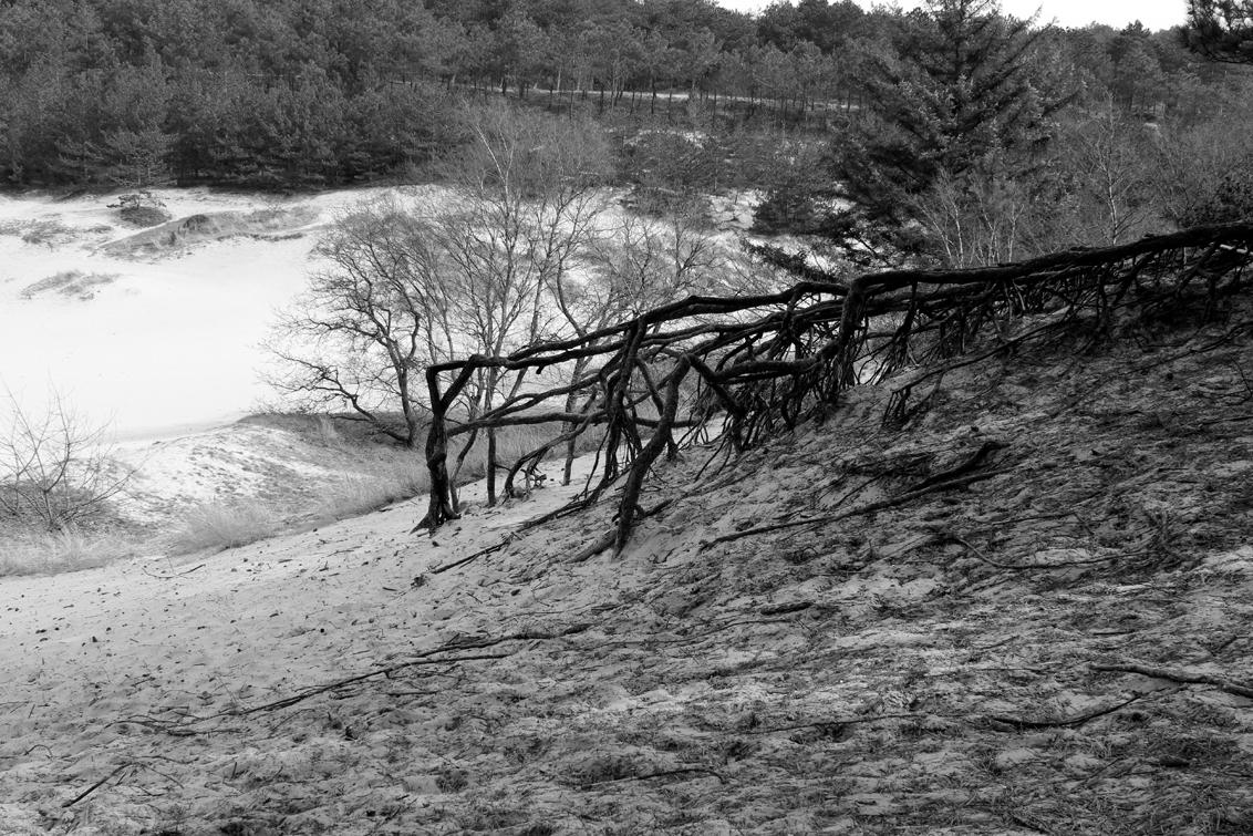 Wortels - Mooie wortels. - foto door yvonnevandermeer op 28-03-2013 - deze foto bevat: duinen, schoorl, zwart wit, roet route