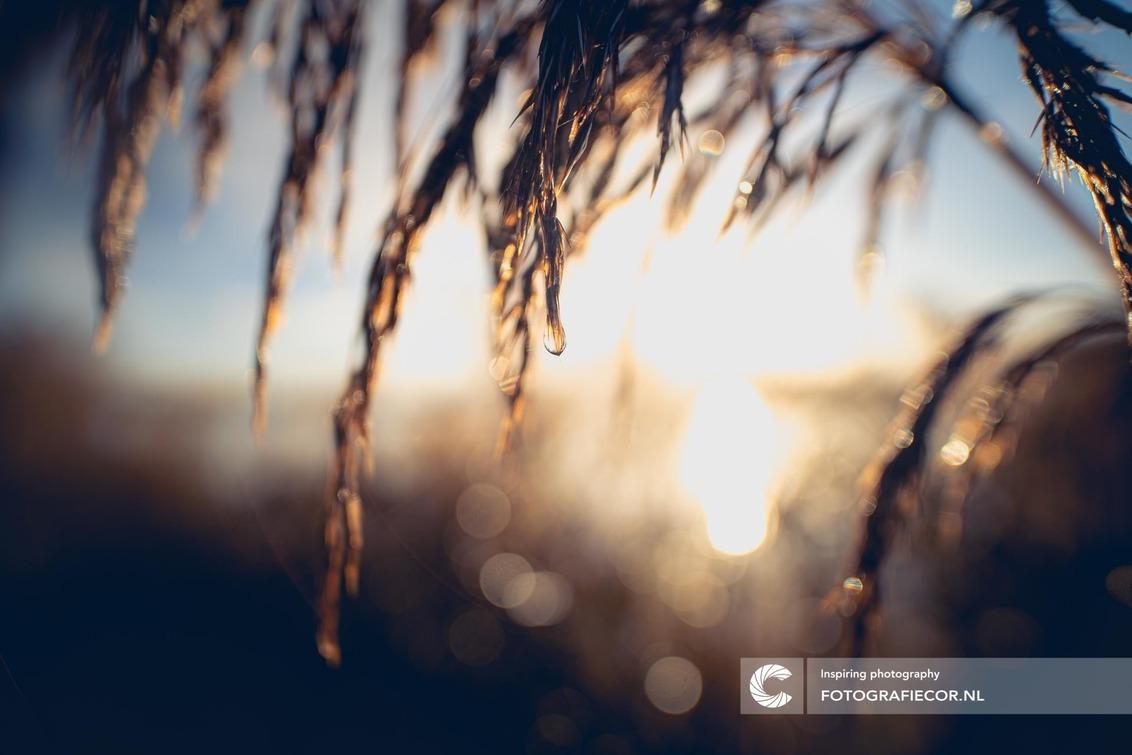 Drops like pearls - Soms snap je niet wat je ziet totdat je ertussen duikt en ontdekt dat het die kleine wereld van magie is die je aandacht heeft weten te grijpen. - foto door Fotografiecor op 08-01-2021