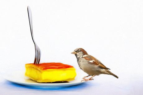 dierendag vieren met gebak.............