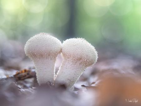 Samen.. - paddo tijd hè ;) - foto door BNN op 28-09-2017 - deze foto bevat: macro, paddenstoelen, bnn