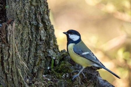 Koolmees - Genomen in mijn tuin - foto door bertus52 op 11-04-2021 - deze foto bevat: vogel, natuur, afdeling, bek, takje, boom, veer, hout, kofferbak, zangvogel