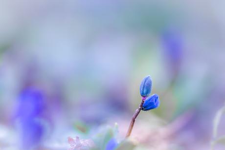 Tekenen van lente