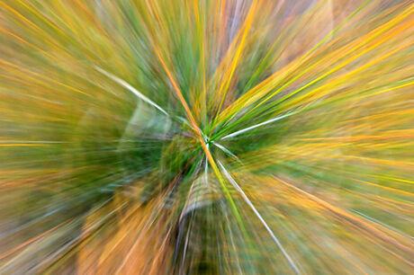 Zoomen op afstervende grassen