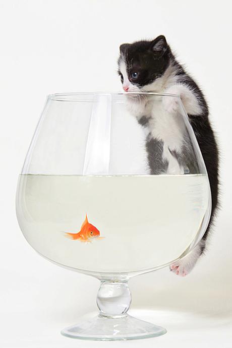 Kleintje aan het vissen