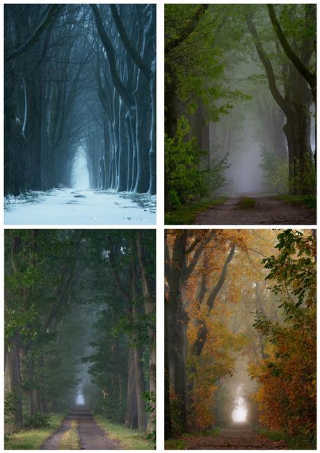 Vierluik seizoenen
