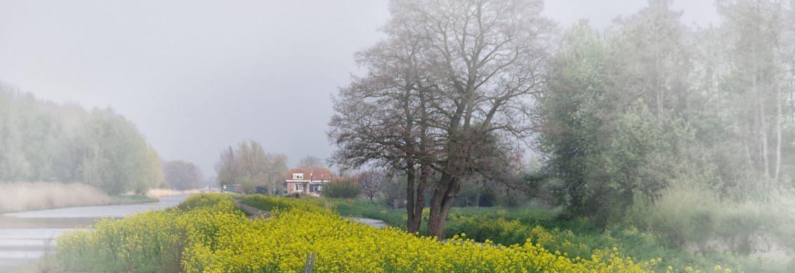 bij Goudriaan - vlakbij de slingelandse plassen, pal naast de provinciale weg (deze foto met geluid is heel vervelend) ligt dit mooie plaatje - foto door johntomeij op 23-03-2020 - deze foto bevat: panorama, lente, landschap